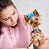 Ausschnitthund-` s Haar lizenzfreies stockfoto