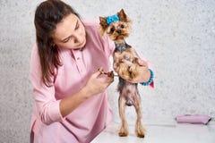 Ausschnitthund-` s Haar stockbilder