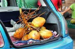 Aussi frais que lui obtient pour des noix de coco Photo libre de droits