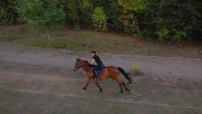 Aussicht von der Höhe der Frau auf einem braunen Pferd mit Galopp im Freien stock video