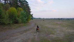 Aussicht von der Höhe der Frau auf einem braunen Pferd mit Galopp im Freien stock video footage
