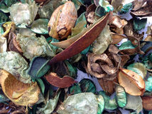 Aussie Bush Pot Pourri Royalty Free Stock Photography