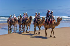 Aussie camel ride Royalty Free Stock Photography