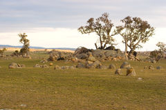 Aussie Wilderness. The rock strewn Australian high country wilderness with isolated Eucalyptus Stock Photo