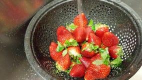 Ausspülen der Erdbeeren Lizenzfreies Stockfoto