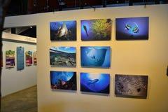 Ausstellung Lizenzfreies Stockbild