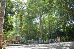 Ausstellung auf Wäldern Lizenzfreie Stockfotos