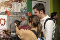 Ausstellung und Verteilung von Katzen von einem Schutz Lizenzfreies Stockfoto