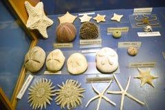 Ausstellungen im Aquarium auf Ellie Beach, die der nächste Strand zu Rhodes Town ist und mit Einheimischen und Touristen ebenso p lizenzfreie stockbilder