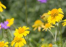 Austauschende Biene lizenzfreie stockfotografie