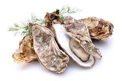 Auster stockfoto