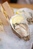 Auster der japanischen Art und Seeigel Stockbild