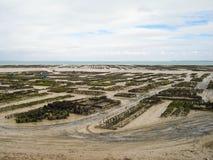 Auster, die in Großbritannien bewirtschaftet Stockfotos