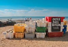 Auster, die in Whitstable aufbereitet Stockbild