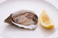 Auster und Zitrone Stockfotos