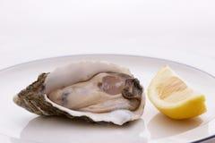 Auster und Zitrone Lizenzfreie Stockfotos