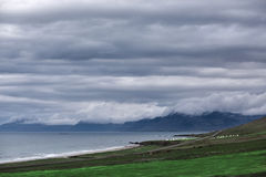 The austere Icelandic landscape with field in the foreground and the mountains and the fjords in the background. The austere Icelandic landscape with field in royalty free stock photo