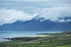 The austere Icelandic landscape with field in the foreground and the mountains and the fjords in the background. The austere Icelandic landscape with field in stock images