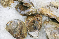 Austern auf Bildschirmanzeige Stockbild