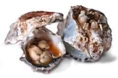 Austern auf dem Shell stockbilder