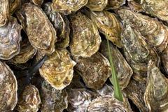 Austern auf dem Zähler in den Holzkisten auf dem Markt Austern für Verkauf am Meeresfrüchtemarkt lizenzfreie stockbilder