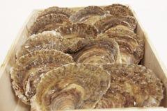 Austern auf einem weißen Hintergrund Lizenzfreies Stockbild
