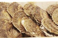 Austern auf einem weißen Hintergrund Lizenzfreie Stockbilder