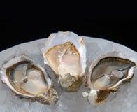 Austern auf einer Platte mit Eis Lizenzfreies Stockbild