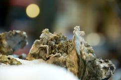 Austern auf Eis Stockfotografie