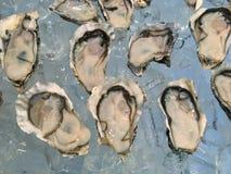 Austern auf Eis Stockbilder