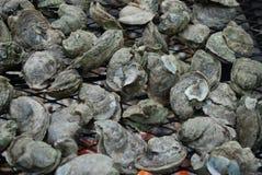 Austern, die auf einem Grill braten Stockfotos