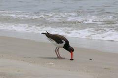 Austern-Fängeressen stockfotografie