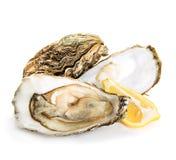 Austern lokalisiert auf einem Weiß Lizenzfreie Stockbilder