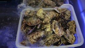 Austern mit Krabbe im Aquarium stock video footage