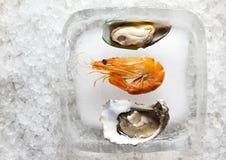 Austern und Garnele Stockfoto