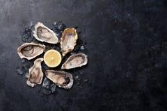 Austern und Zitrone stockfotos