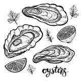 Austern-Vektor-Illustration Meeresfrüchteskizzen von Muscheln lizenzfreie stockbilder