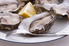 Austern, Zitrone und Gabel Lizenzfreie Stockfotos