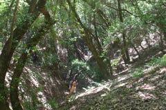 Austin Creek State Recreation Area - parco che comprende un'area di regione selvaggia Suo include i burroni immagine stock