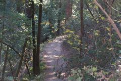 Austin Creek State Recreation Area - park encompassing an  wilderness area. Its includes ravines, grassy hillsides, oak-ca Royalty Free Stock Photo
