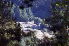 Austin Creek State Recreation Area - park encompassing an  wilderness area. Its includes ravines, grassy hillsides, oak-ca Stock Images