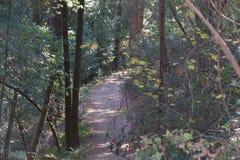 Austin Creek State Recreation Area - parkera att omringa ett vildmarkområde Dess inkluderar ravin, gräs- backar, ek-CA royaltyfri foto