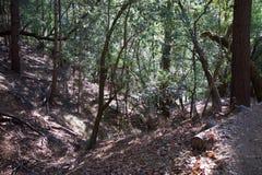 Austin Creek State Recreation Area - parkera att omringa ett vildmarkområde Dess inkluderar ravin, gräs- backar, ek-CA arkivfoton