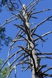 Austin Creek State Recreation Area - parkera att omringa ett vildmarkområde Dess inkluderar ravin, gräs- backar, ek-CA royaltyfria foton