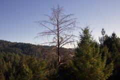 Austin Creek State Recreation Area - parkera att omringa ett vildmarkområde Dess inkluderar ravin, gräs- backar, ek-CA royaltyfria bilder