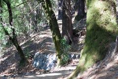 Austin Creek State Recreation Area - parkera att omringa ett vildmarkområde Dess inkluderar ravin, gräs- backar, ek-CA arkivbild
