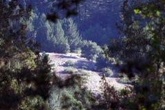 Austin Creek State Recreation Area - parkera att omringa ett vildmarkområde Dess inkluderar ravin, gräs- backar, ek-CA arkivbilder