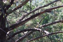 Austin Creek State Recreation Area - parkera att omringa ett vildmarkområde Dess inkluderar ravin, gräs- backar, ek-CA fotografering för bildbyråer