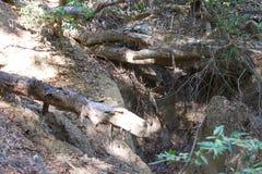Austin Creek State Recreation Area - parkera att omringa ett vildmarkområde Dess inkluderar ravin, gräs- backar, ek-CA arkivfoto