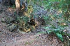 Austin Creek State Recreation Area - parkera att omringa ett vildmarkområde Dess inkluderar ravin, gräs- backar, ek-CA royaltyfri fotografi